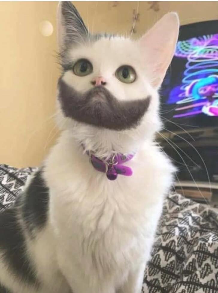 gatto-con-barbetta