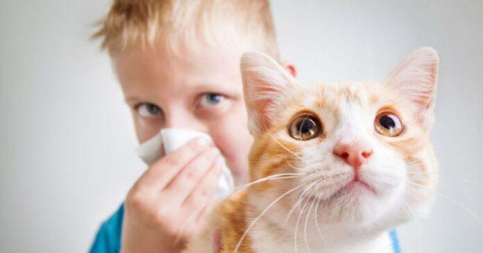 I gatti-possono-difendere-i-bambini-da-asma-e-allergie