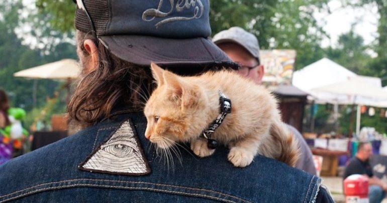 salvato un atro gattino