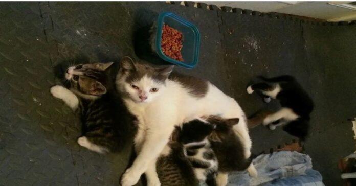 Mamma-gatto-selvatica-prende-fiducia-nell'-uomo