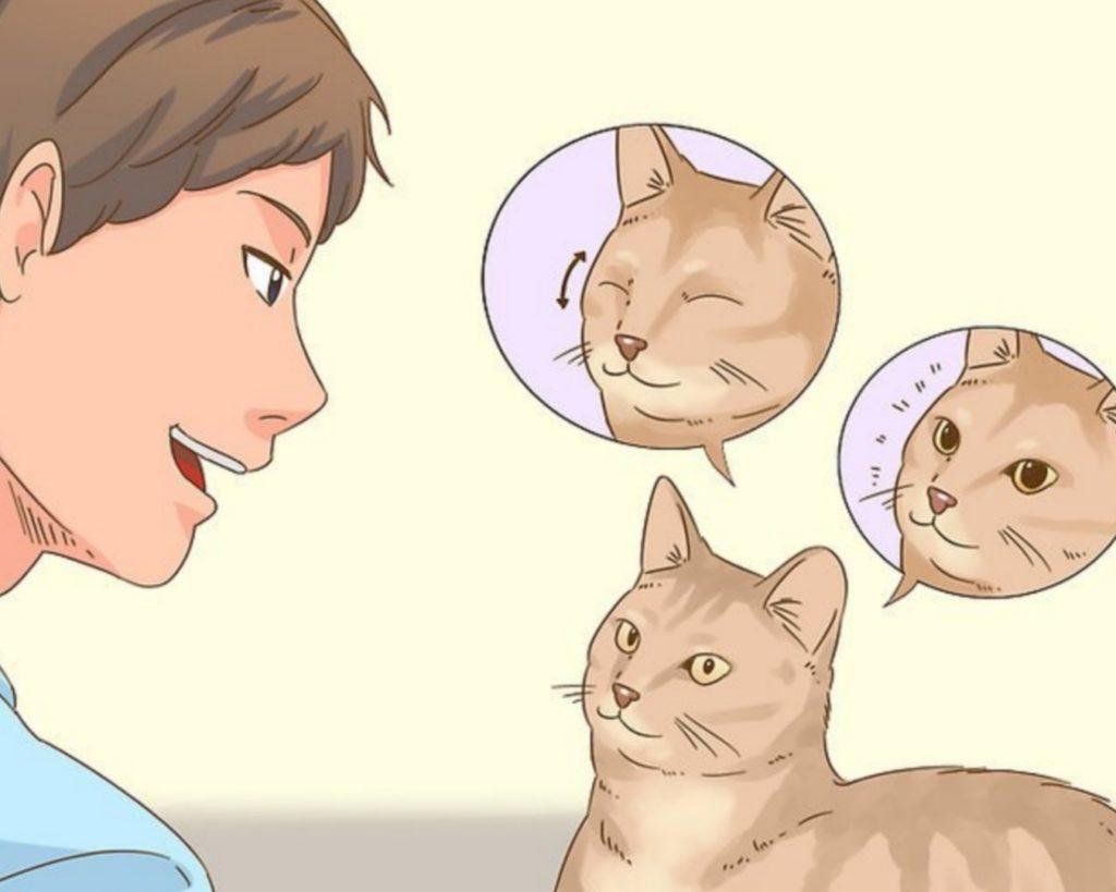 gatto guarda e ascolta padrone