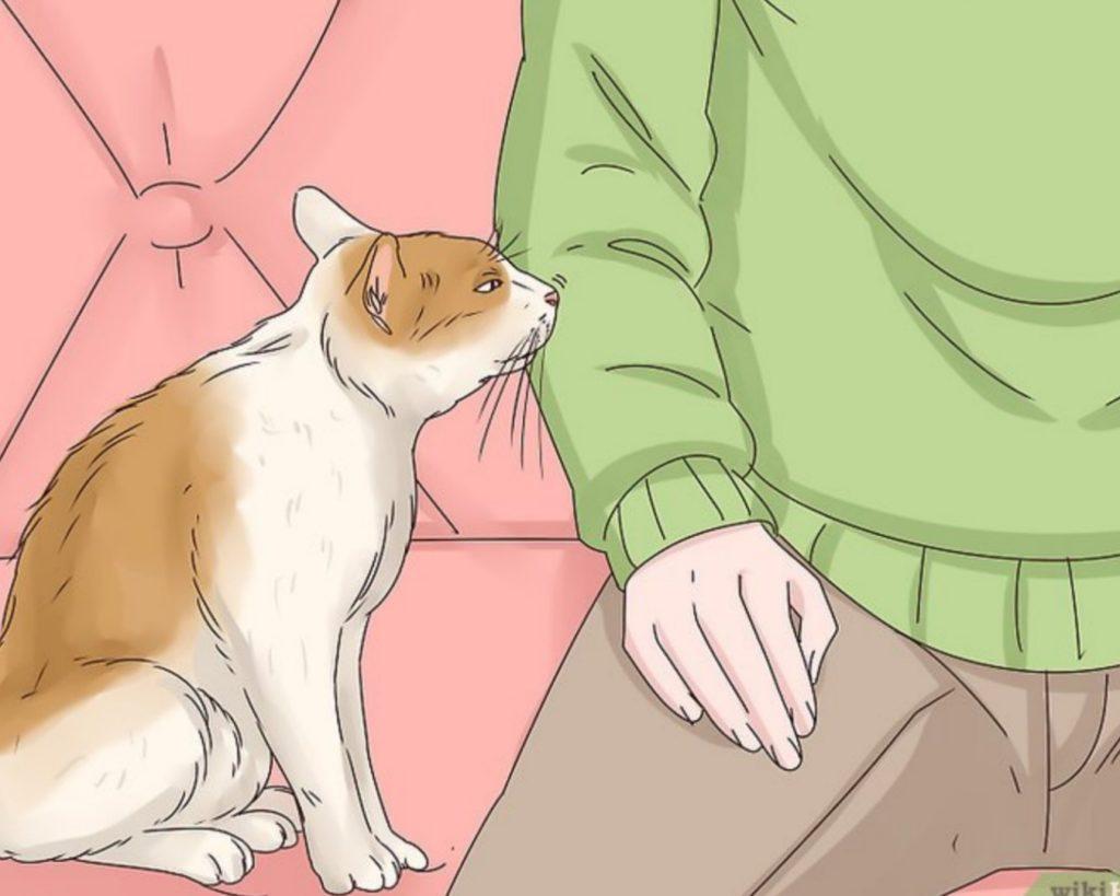 gatto annusa padrone