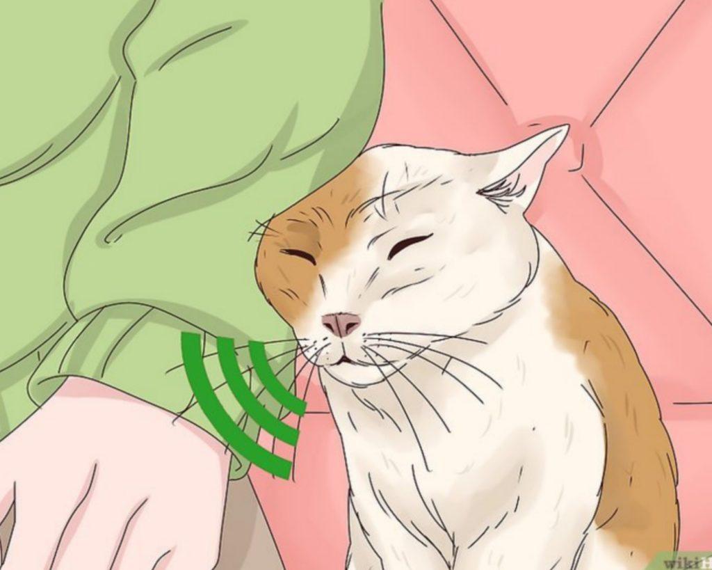 gatto vicino al padrone