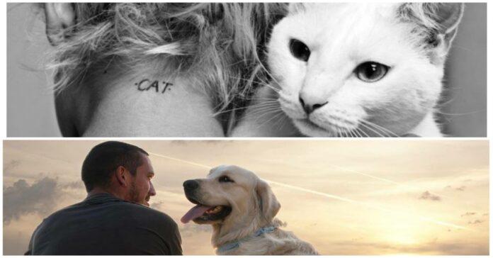 Proprietari-dei-gatti-più-infelici-di-quelli-dei-cani