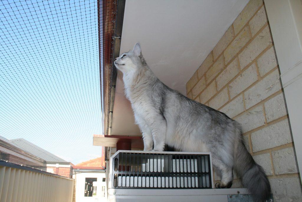 gatto in balcone