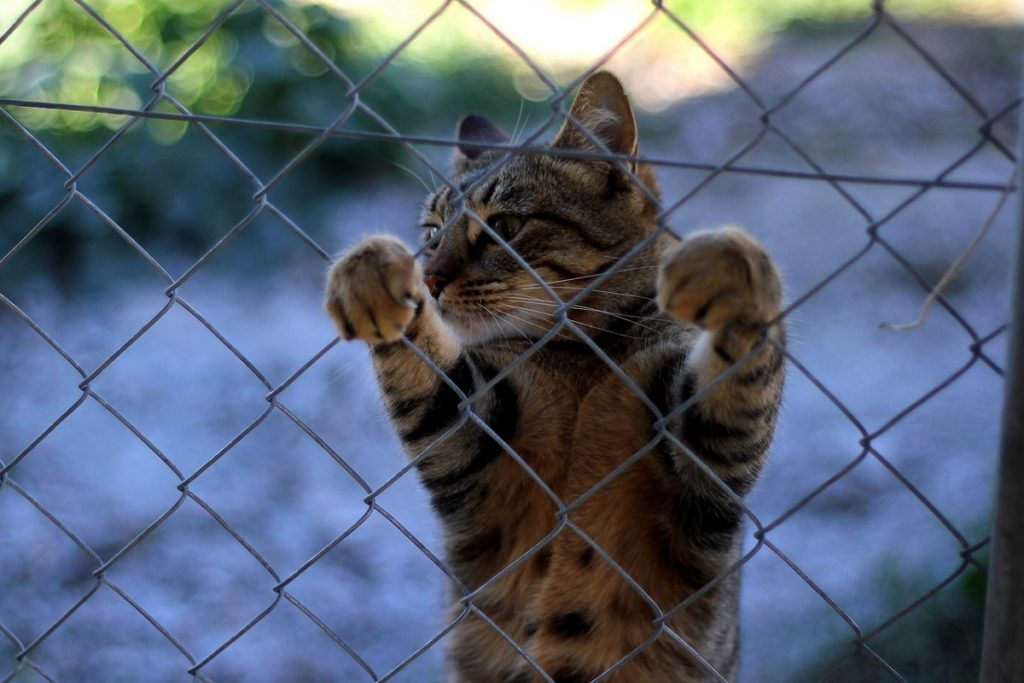 reti protettive per gatti