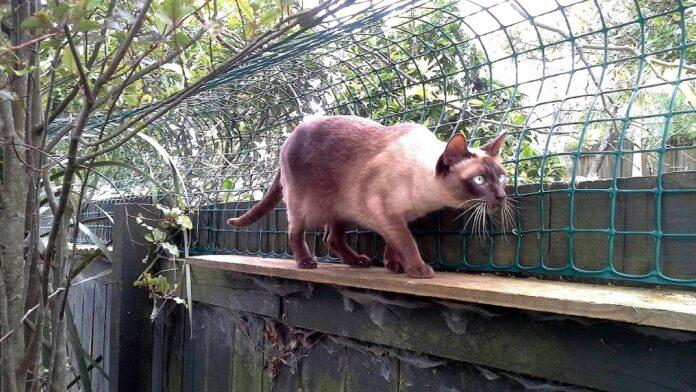 gatto cammina dietro rete