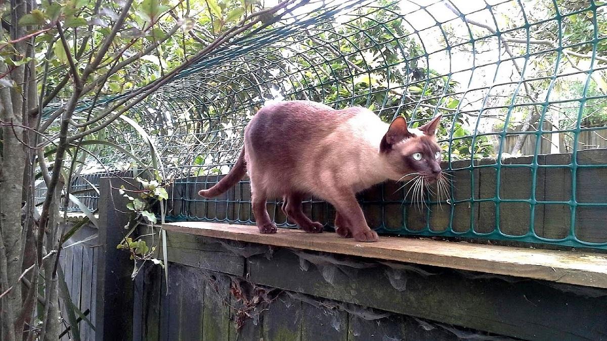 Rete Per Gatti Condominio rete per protezione gatto: tutte le opzioni e alternative