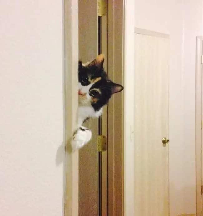 mentre ti spia da dietro la porta