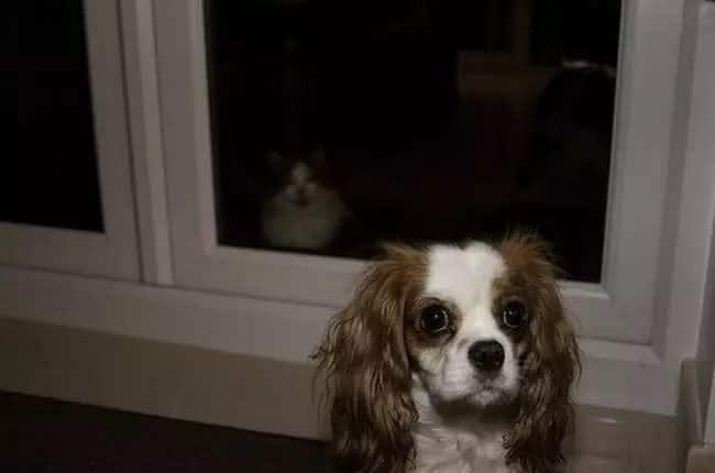 osserva tutti gli animali di casa