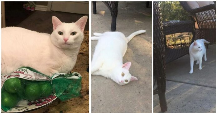 Sophie-la gatta-che-ha- cambiato-la-vita-di-un-uomo