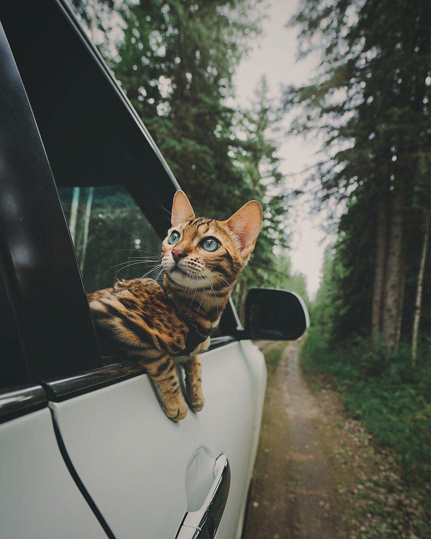 Suki il gatto viaggiatore