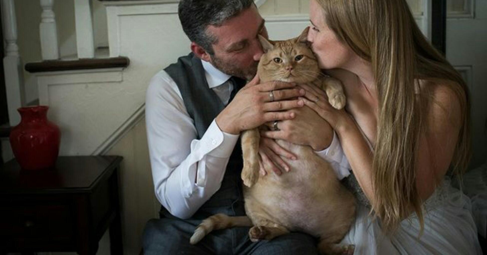 il gatto nelle foto del matrimonio