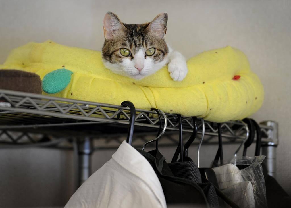 gatti a lavoro con i padroni