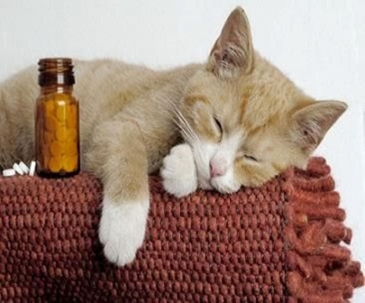 gatto-con-medicine