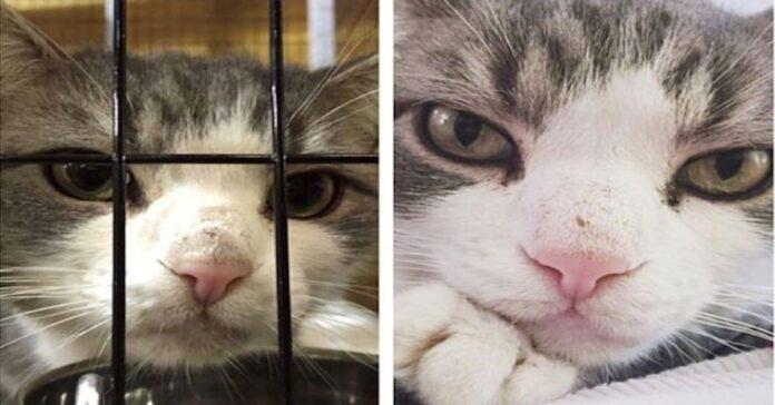 adottare-un-gatto-un-bellissimo-gesto-di-solidarietà