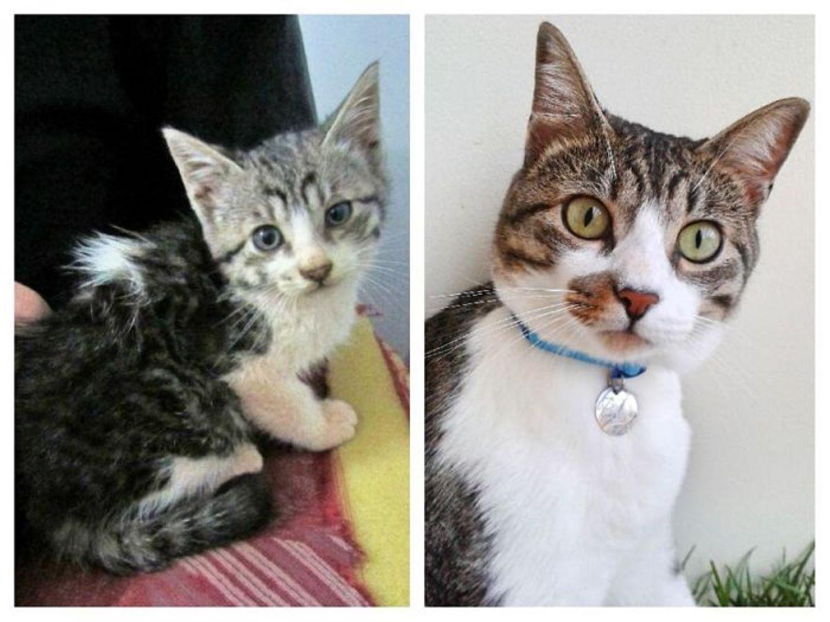 gatto-con collarino-azzurro