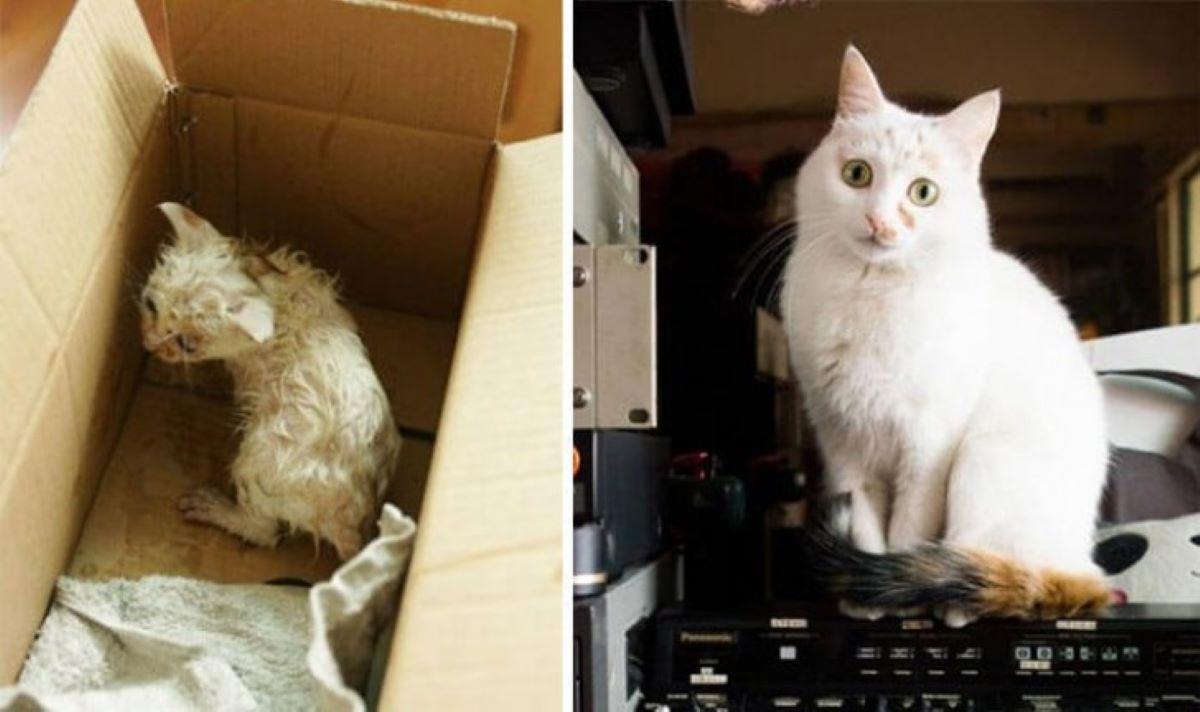 gatto-dopo-adozione