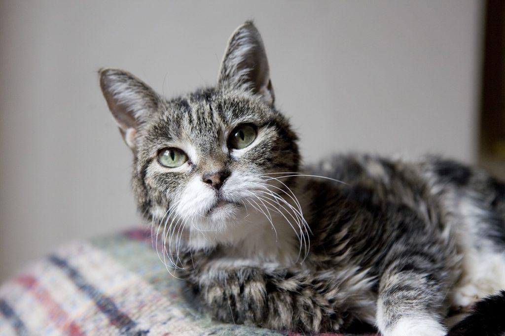 gatto anziano sul letto