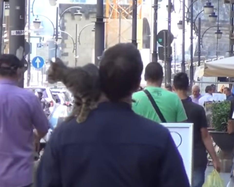 il gatto a spasso
