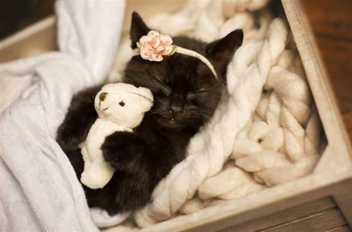 gattino-con-orsetto-e-fascia