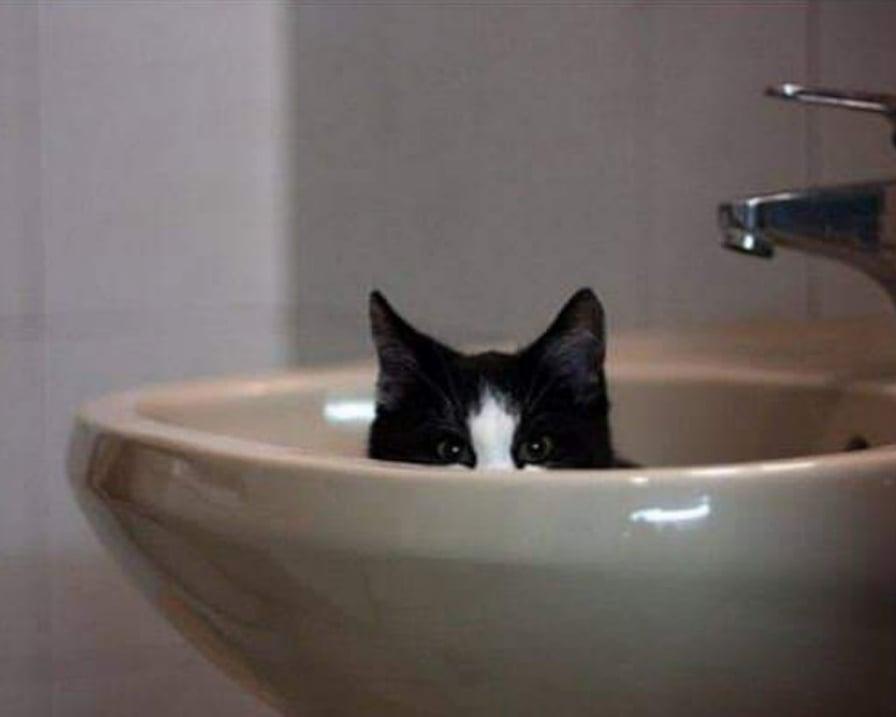 il gatto ci segue in bagno