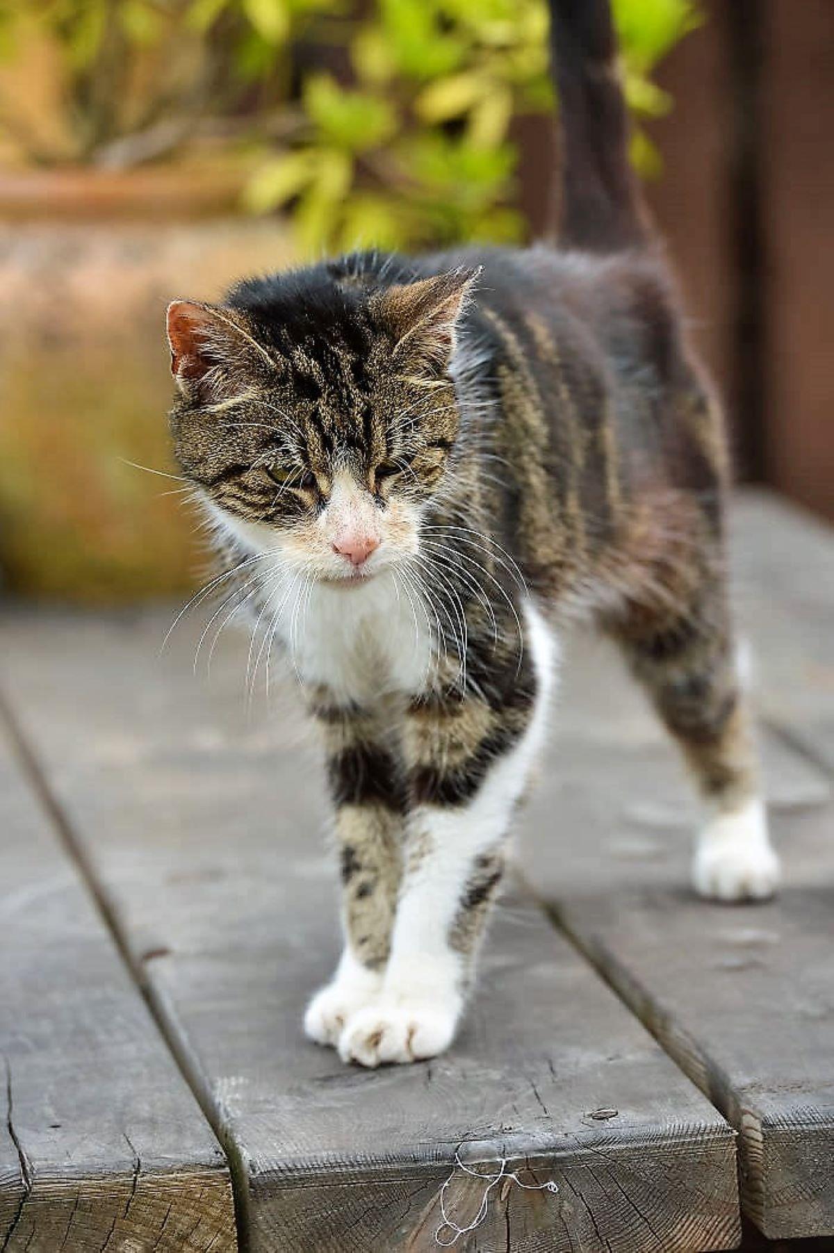 gatto-boo-ritrovato