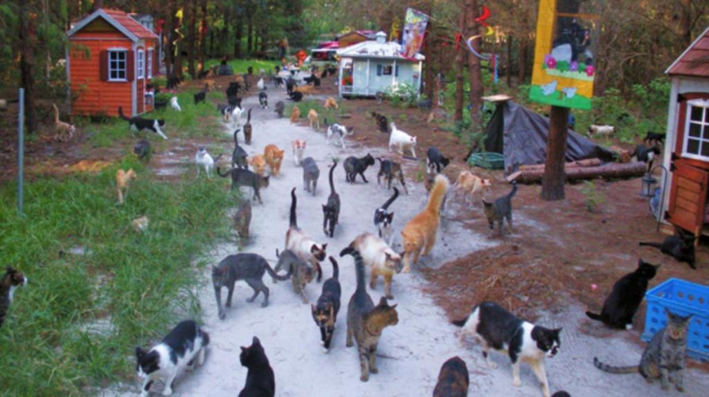 lo chiamano il paese dei gatti