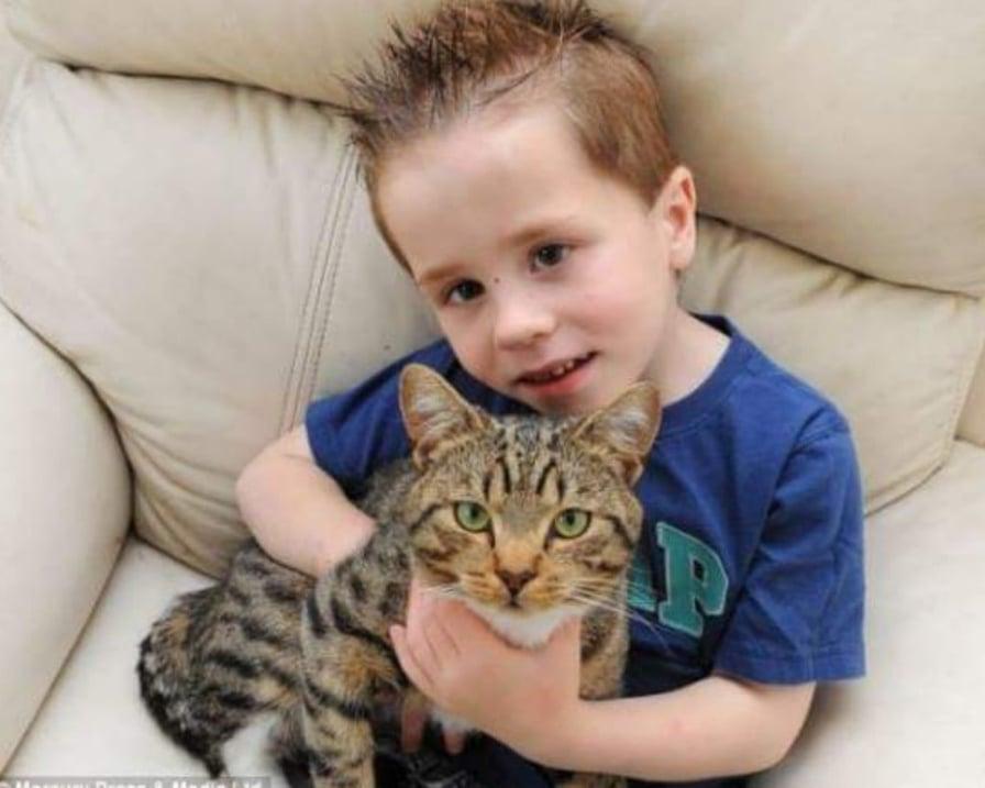 gatto salva bimbo dai bulli