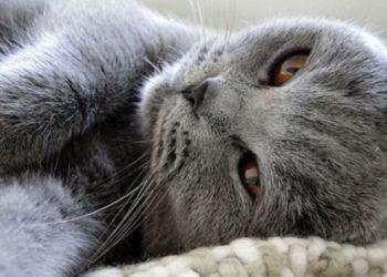 che-cosa-vuole-dirmi-il-mio-gatto