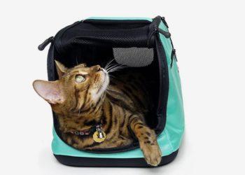 gatto nel trasportino