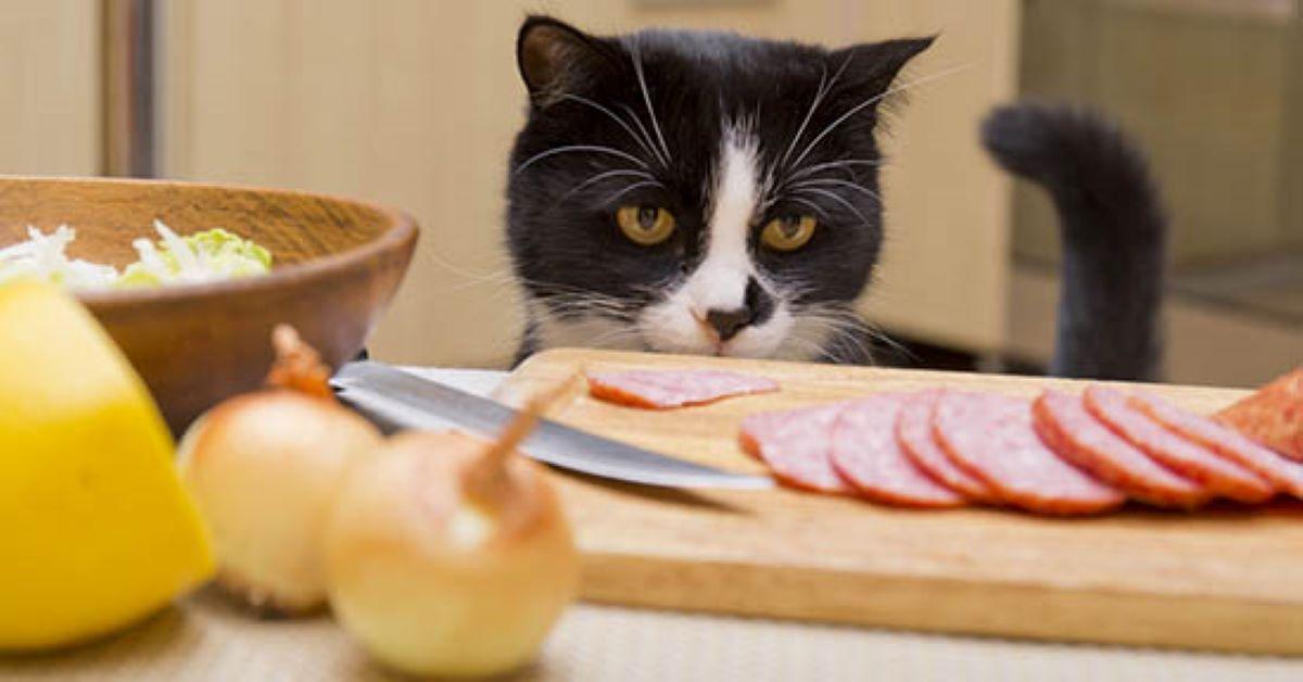 gatto-che-guarda-salame
