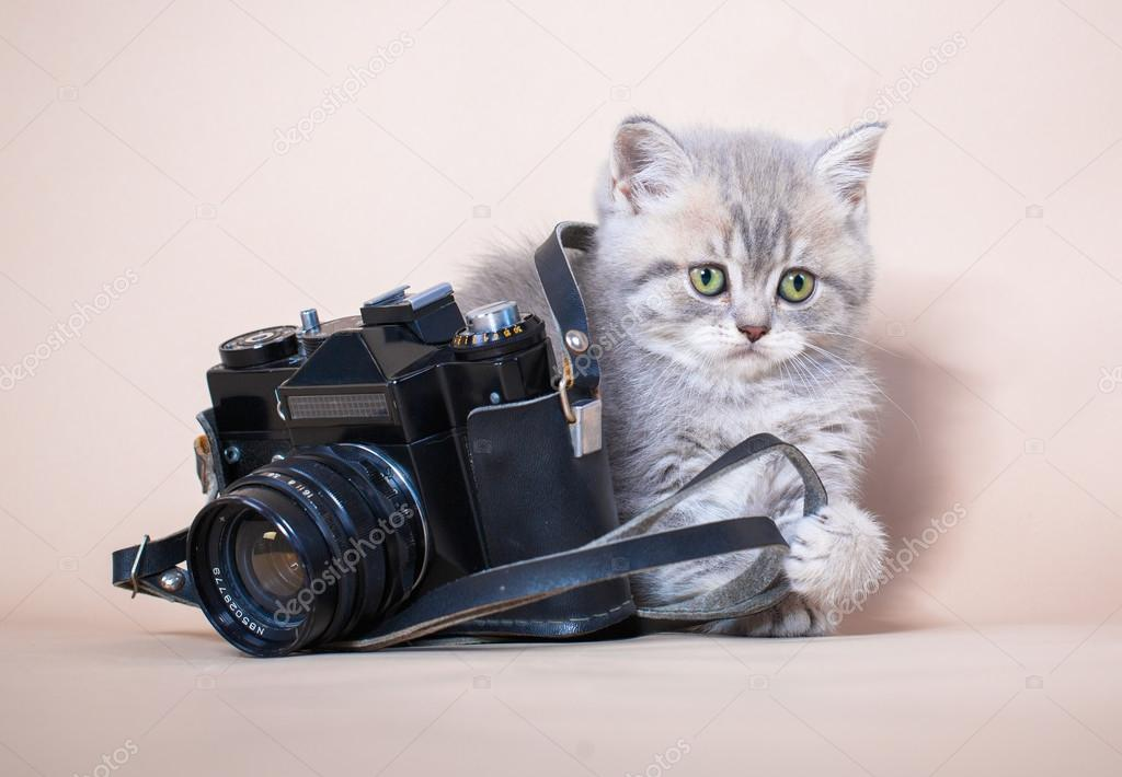 gattino al centro del nostro obiettivo
