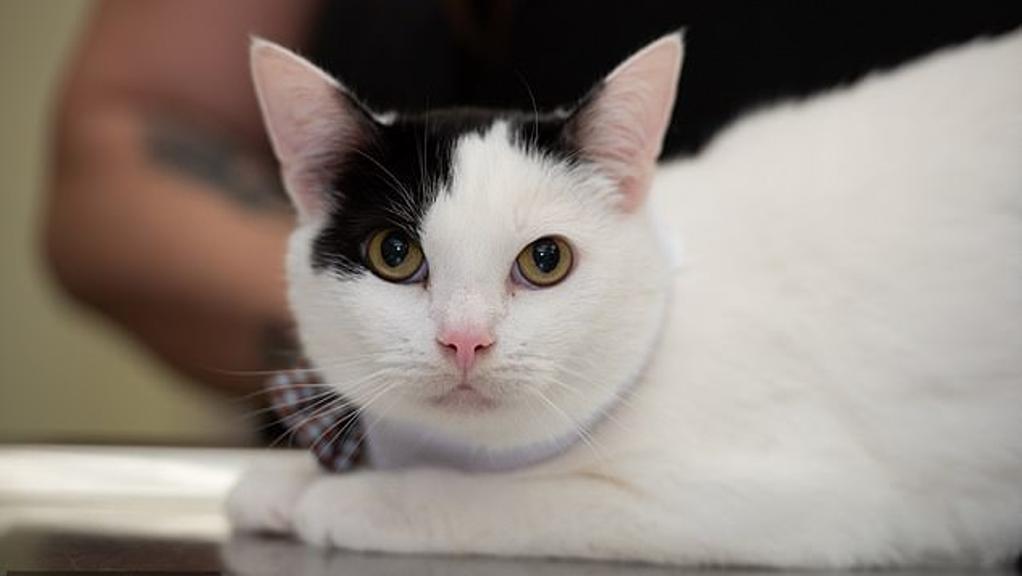 gatto-intervento-salvavita