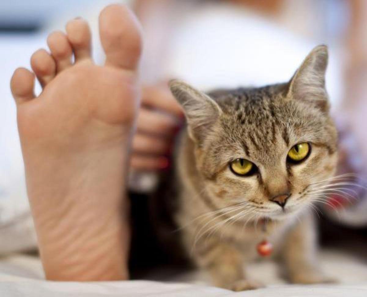 gatto-vicino-ai-piedi