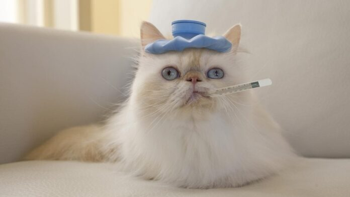 gatto con borsa del ghiaccio