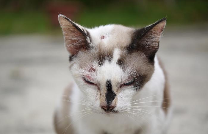 ferite-del-gatto