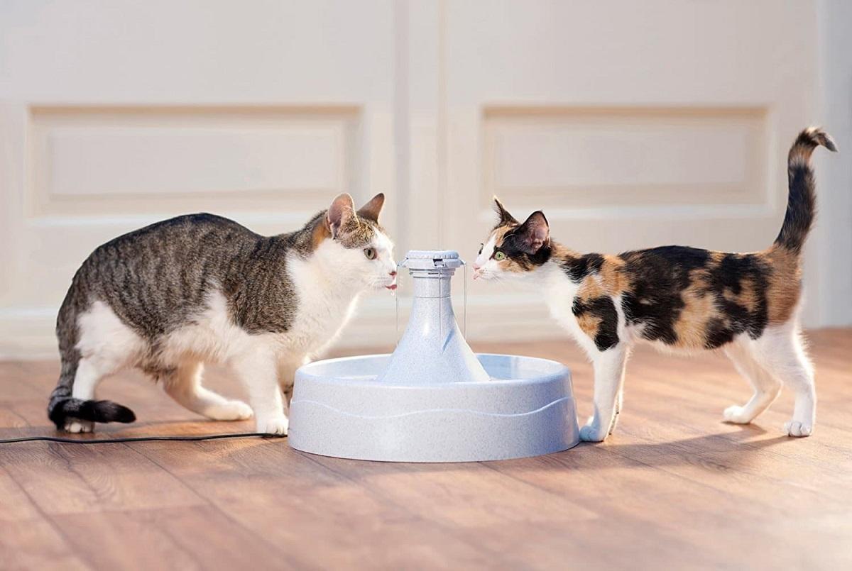 due gatti che bevono