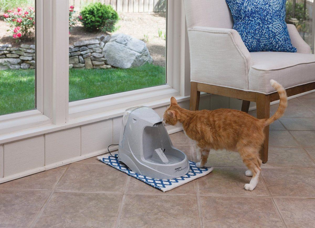gatto fontanella bianca