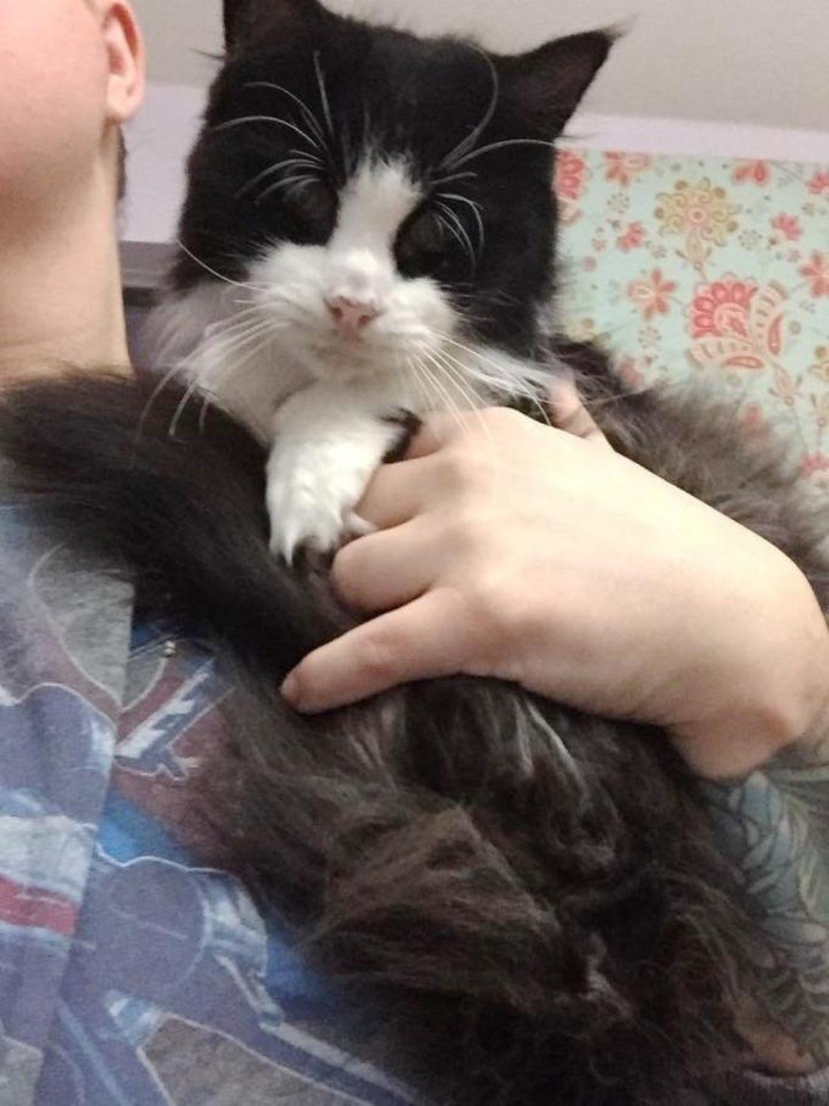 gatta-cieca-in-braccio