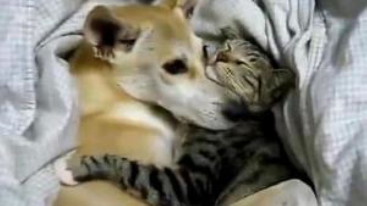 gatta-abbracciata-a-cane