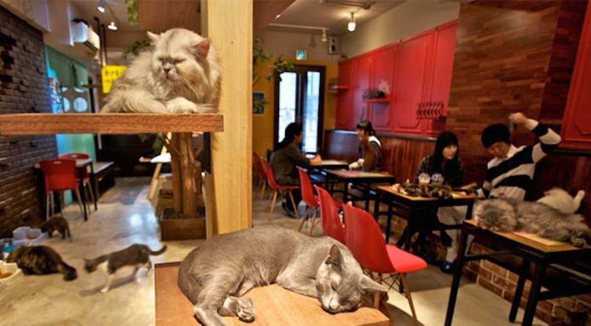 gatti-al-cat-cafè