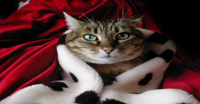 gatti-e-comportamento-8-errori-da-evitare