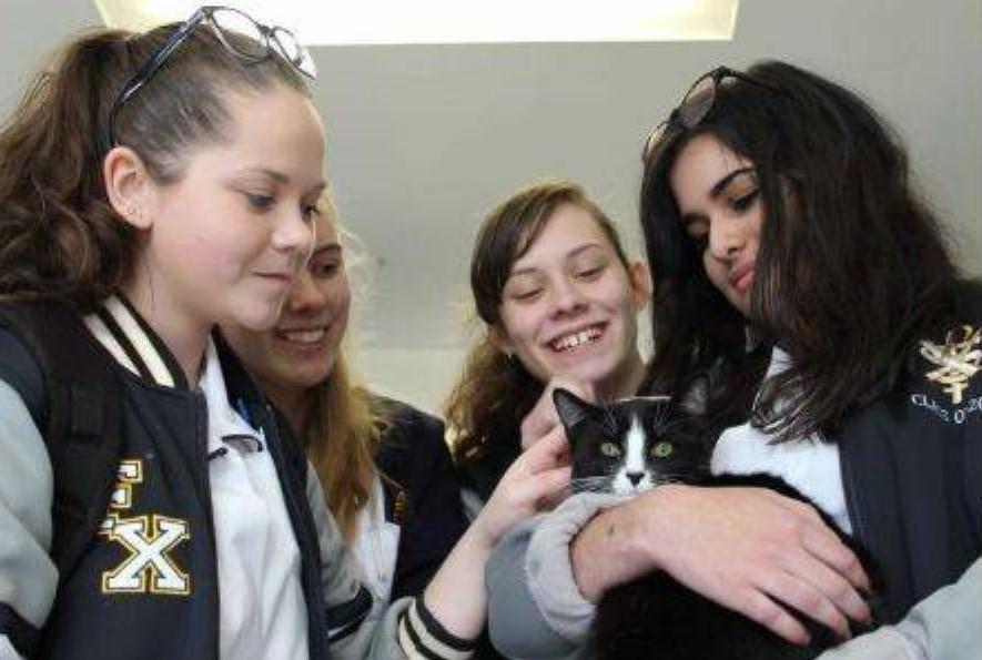 gatti-con-studentesse