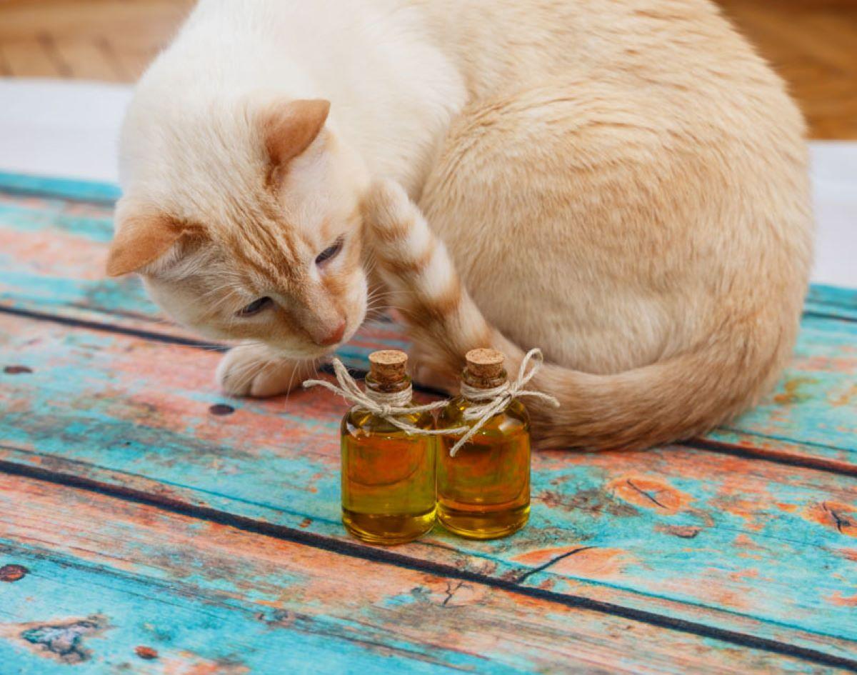 gatto-con-bottiglietta-di-olio