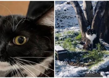 gatti-selvatici-trovano-una-famiglia