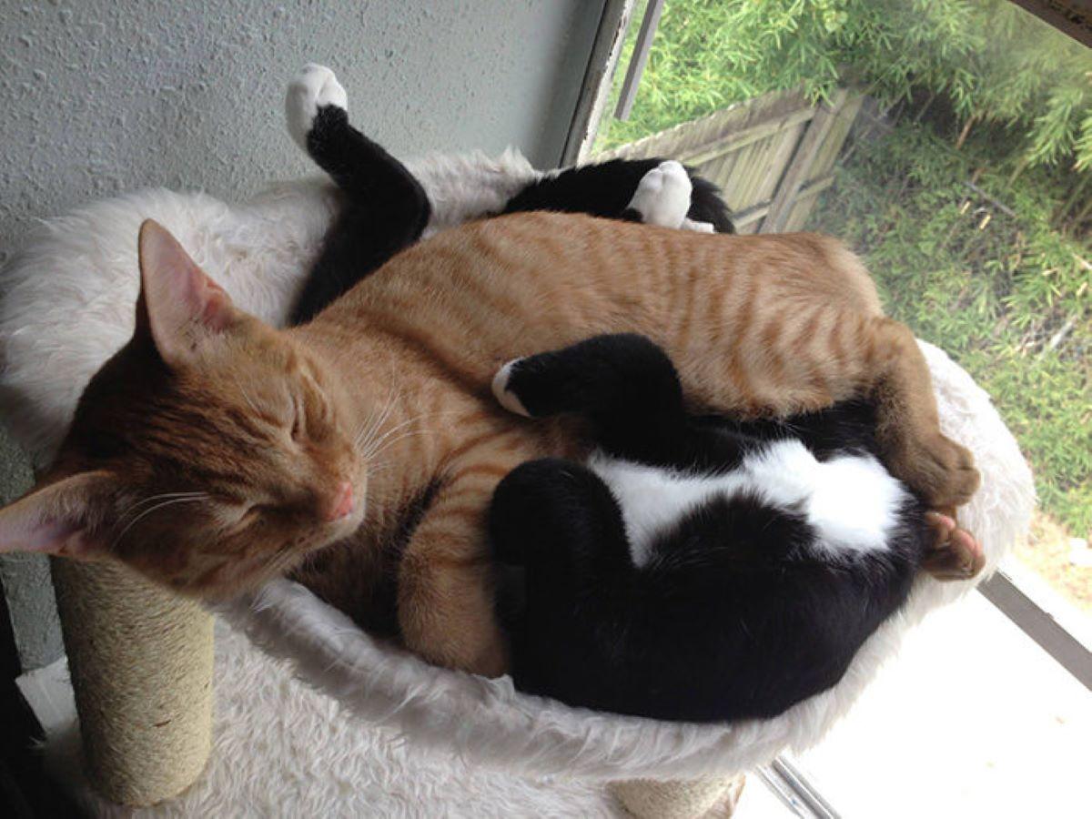 gatti-che-dormono-insieme