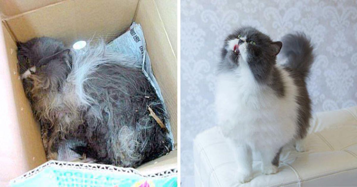 gatto-dentro-ad-una-scatola