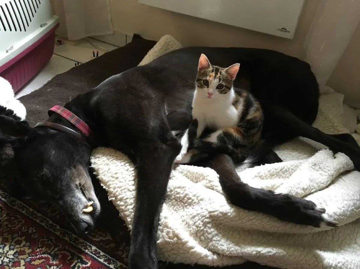 gattina-vicino-a-cane