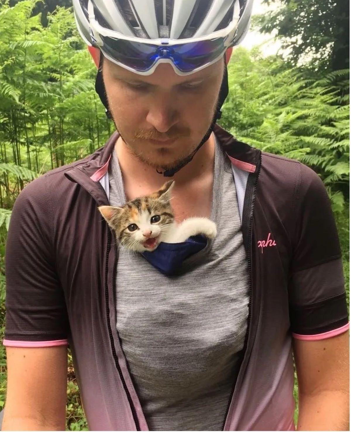 gattina-dentro-maglietta